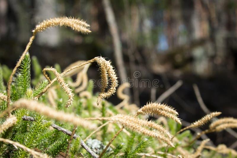 美丽的植物在森林里 免版税库存照片
