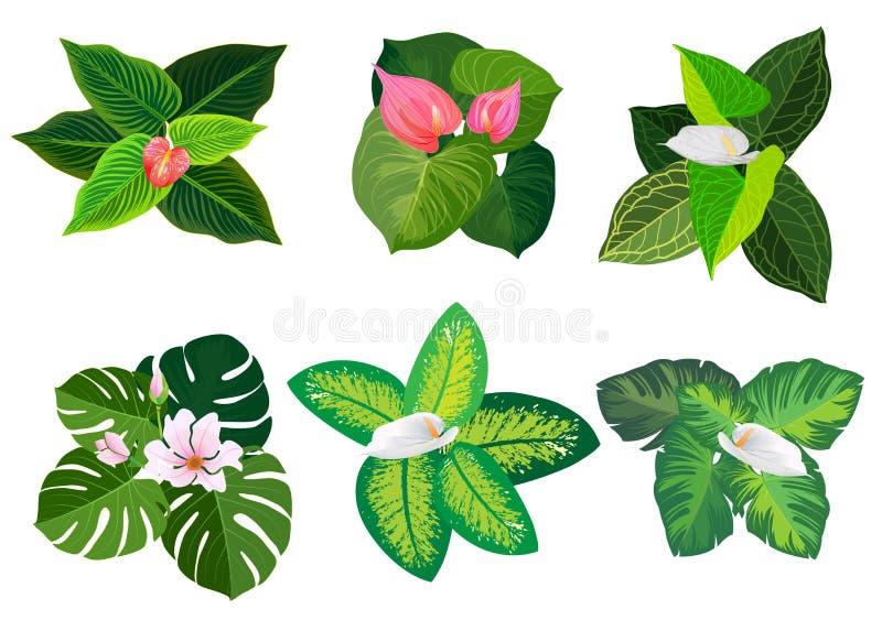 美丽的植物热带海岛小环  皇族释放例证