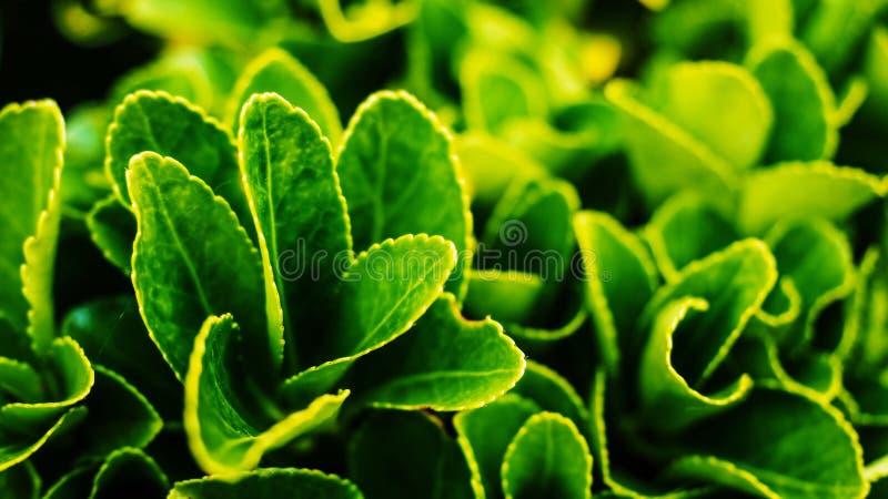 美丽的植物特写镜头射击 免版税库存照片