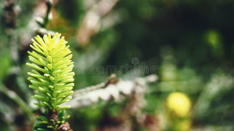 美丽的植物特写镜头射击 库存照片