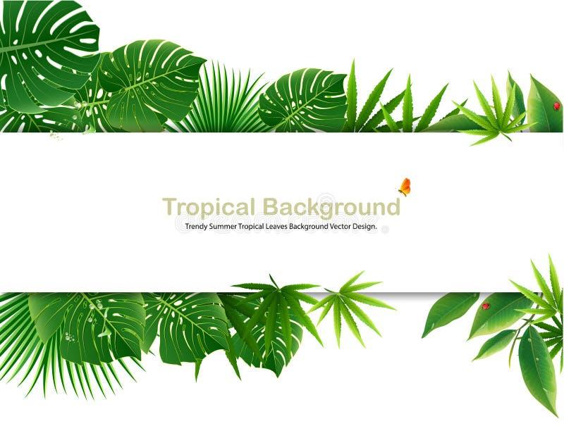 美丽的植物绿色和adstract ba的热带海岛春天 皇族释放例证