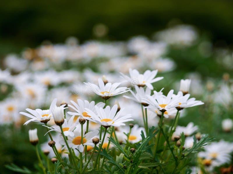 美丽的植物群在庭院里 免版税图库摄影