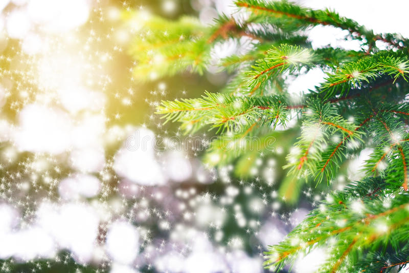 美丽的概念礼服女孩纵向佩带的空白冬天 在五颜六色的背景的云杉的分支与闪闪发光和星 节假日 森林和阳光 免版税库存图片