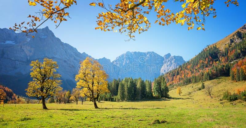 美丽的槭树在秋天-著名奥地利远足的区域研了 免版税图库摄影