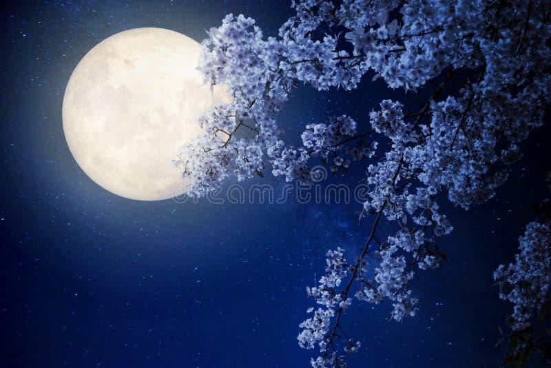 美丽的樱花佐仓开花与在夜空的银河星,满月 免版税库存图片