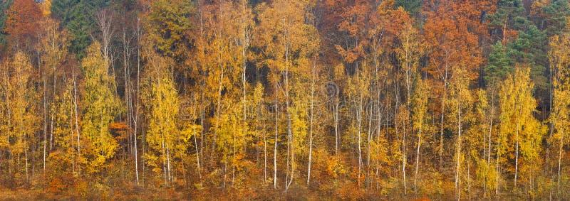 美丽的橙色,红色和绿色秋天森林,在橙色小山全景的许多树 秋天背景长的全景网横幅 库存图片