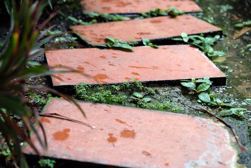 美丽的步行道路在庭院里 自然风景装饰s 免版税库存图片