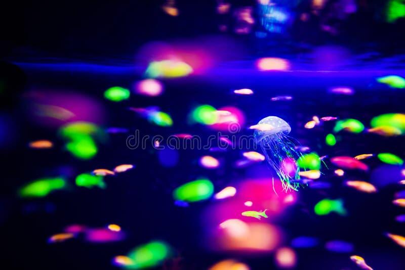 美丽的水母,在霓虹灯的水母与鱼 有蓝色水母和许多的水族馆鱼 做水族馆 免版税图库摄影
