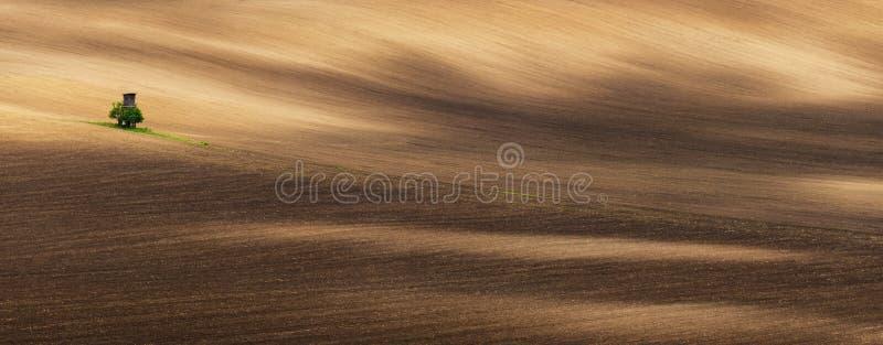 美丽的波浪培养的领域和狩猎塔全景春天 与偏僻的塔的农业风景 免版税库存照片