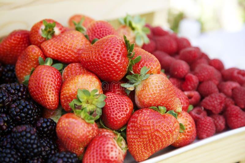 美丽的浆果 库存图片