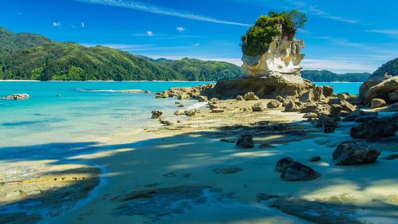 美丽的海滩在新西兰 免版税库存照片