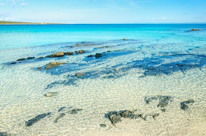 美丽的海滩用清楚的绿松石水, La Pelosa,斯廷廷奥,撒丁岛 免版税库存图片
