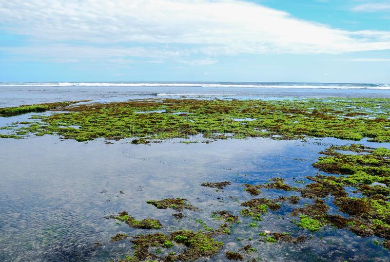 美丽的海滩drini日惹绿浪草蓝色海 图库摄影