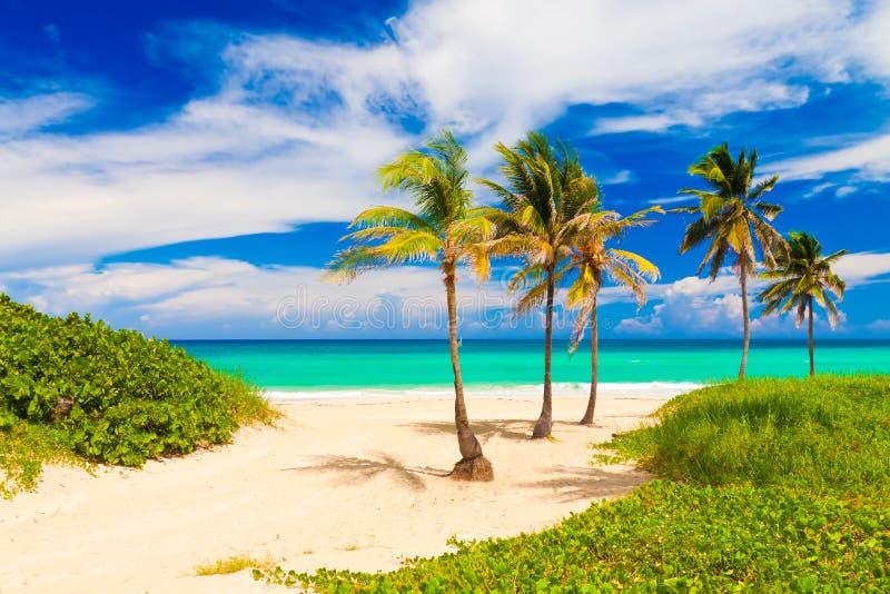 美丽的海滩Varadero在古巴 免版税图库摄影