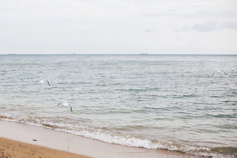 美丽的海鸥和海波浪泡沫在沙滩与贝壳在热带海岛上 波浪和鸟在海洋海湾或盐水湖 免版税库存图片
