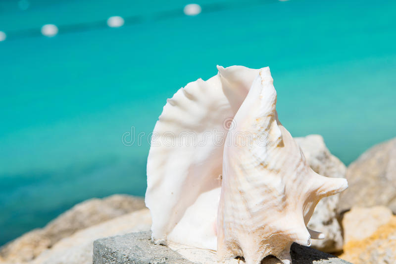 美丽的海洋、海壳、贝壳或者海扇壳纪念品 免版税库存图片