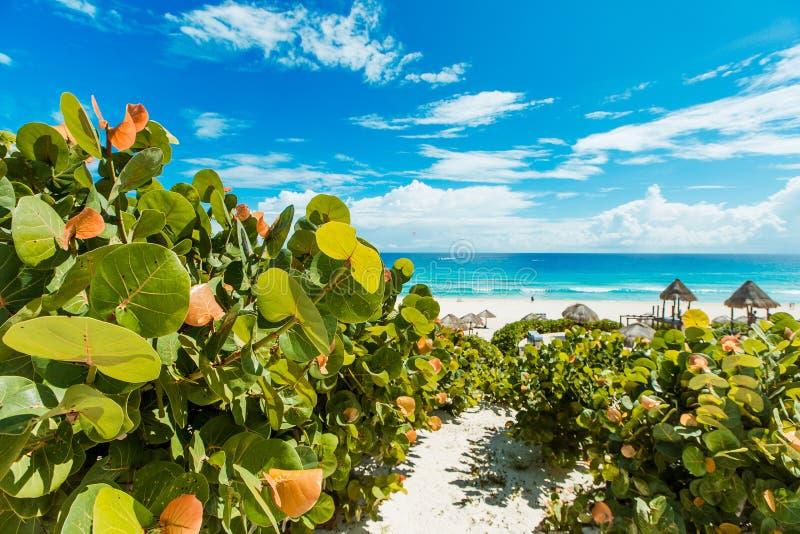 美丽的海滩在坎昆 免版税图库摄影