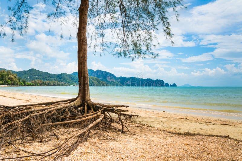 美丽的海滩惊人的看法与树的在前景 地点 库存照片