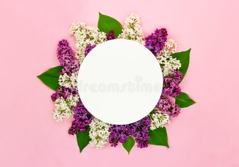 美丽的淡紫色花和圆的空插件在浅粉红色的背景 紫丁香属植物开花 浪漫夏天贺卡 免版税图库摄影