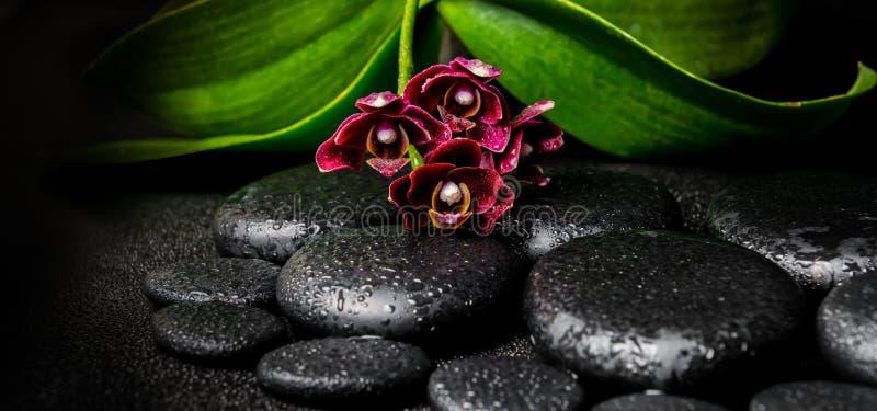 美丽的深紫色的兰花花, phalaenop温泉静物画  库存照片