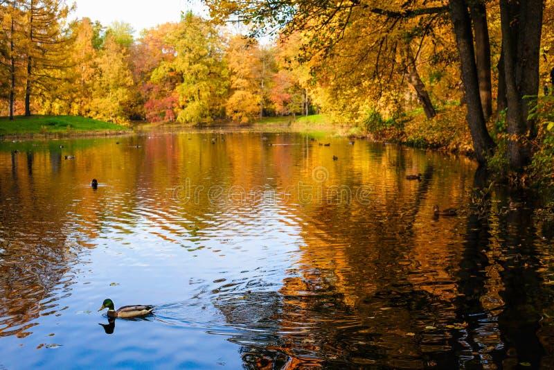 美丽的湖和秋天树 免版税库存图片