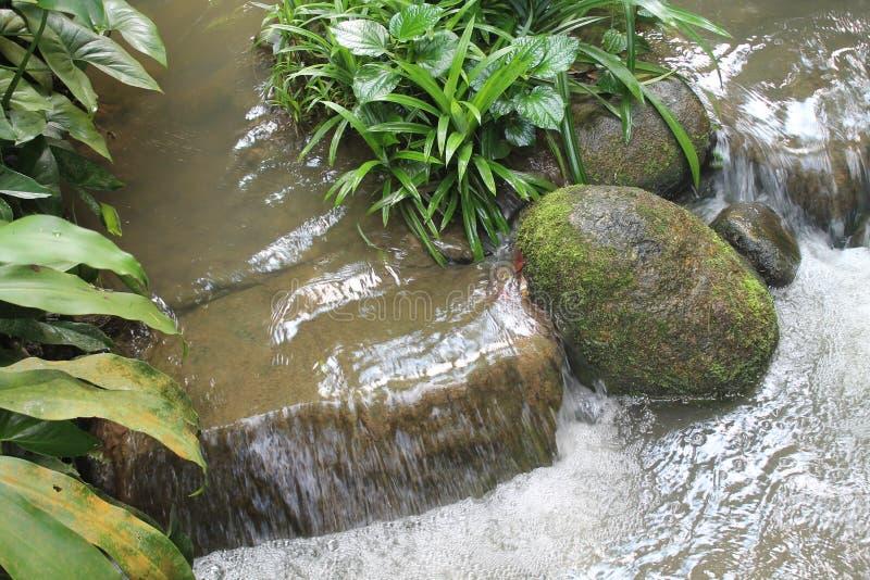 美丽的瀑布在国家公园在新加坡 动物园 库存图片