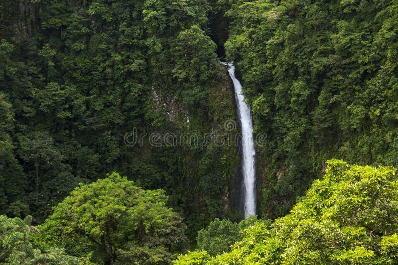 美丽的瀑布从哥斯达黎加的雨林中 免版税库存图片