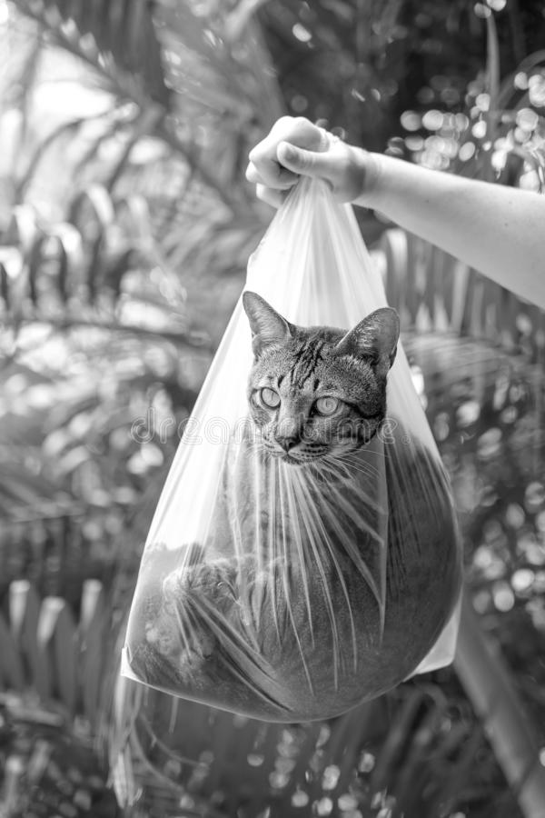 美丽的灰色虎斑猫在塑料袋,关闭里面  E 库存照片