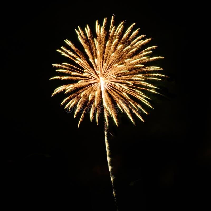 美丽的烟花庆祝在黑背景的天孤立 免版税库存图片