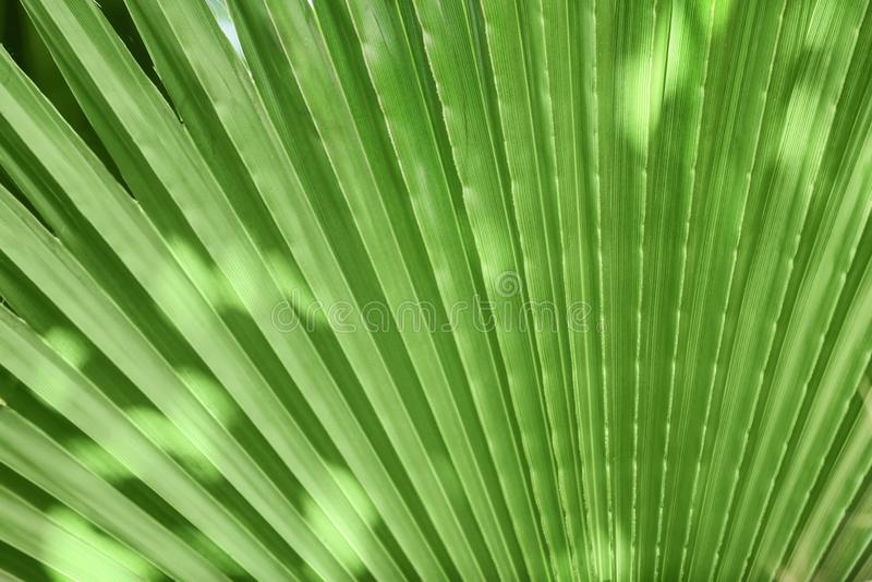 美丽的热带棕榈地方教育局 免版税库存照片