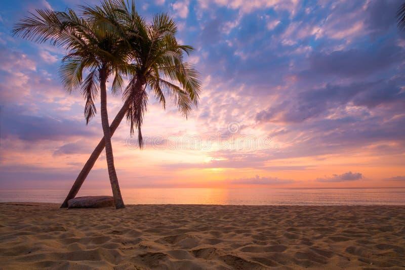 美丽的热带海滩海景与棕榈树的在日出 免版税库存图片