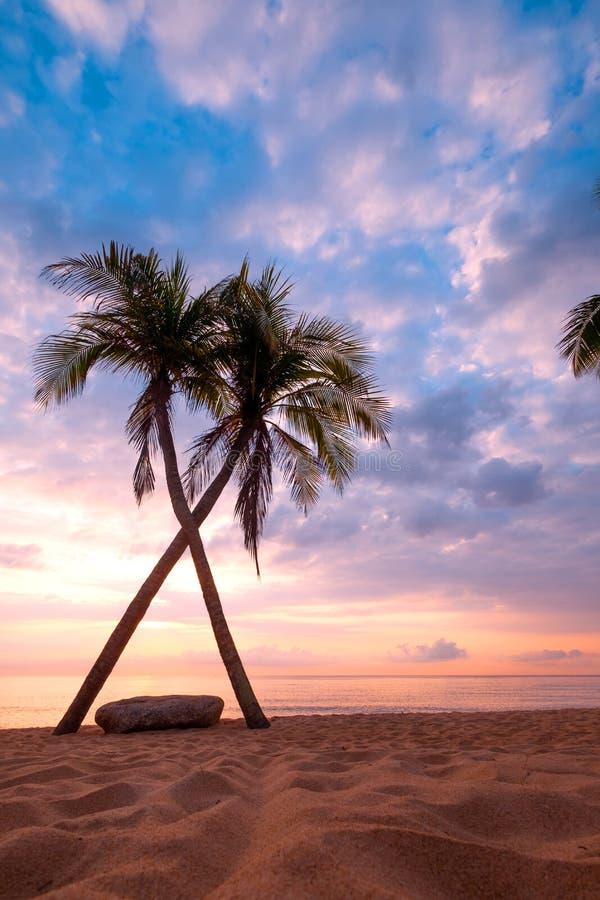 美丽的热带海滩海景与棕榈树的在日出 库存照片