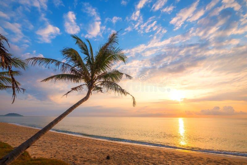 美丽的热带海滩海景  库存照片