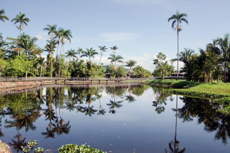 美丽的牙买加湖 图库摄影