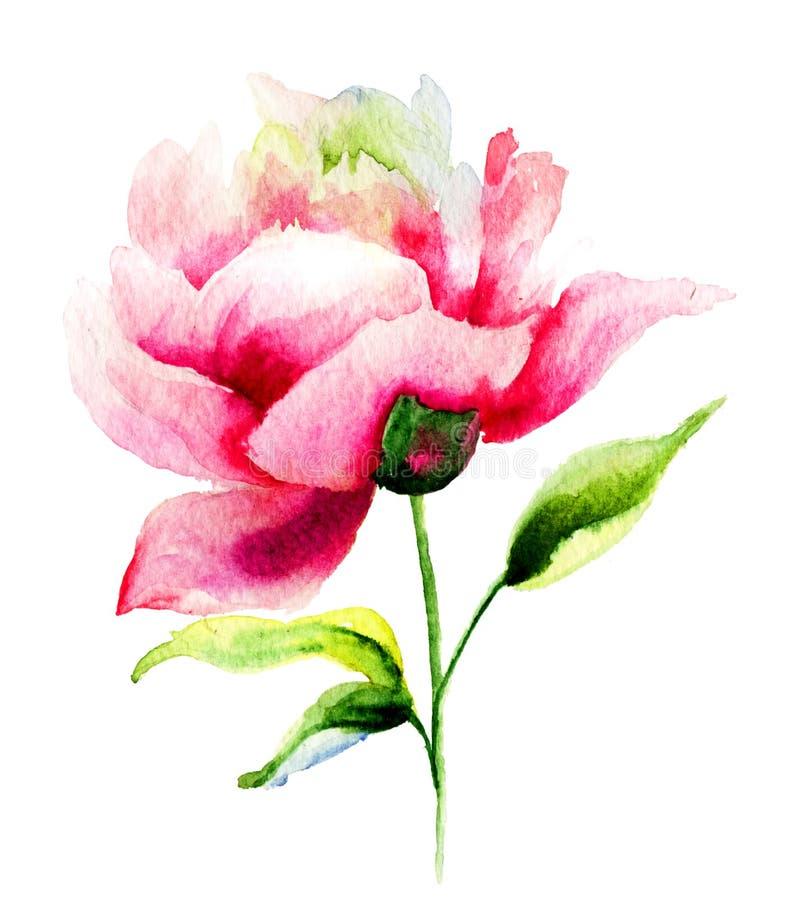 美丽的牡丹花 向量例证