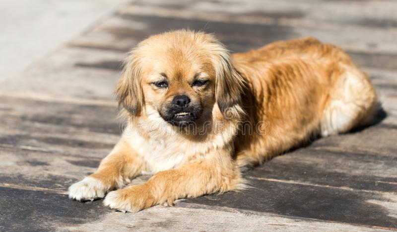 美丽的狗画象本质上 免版税库存照片