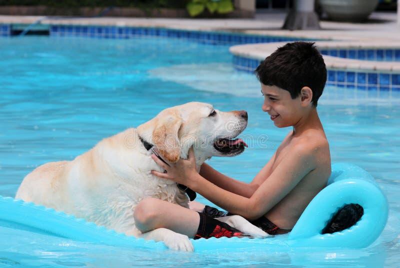 美丽的独特的金毛猎犬放松在水池的拉布拉多狗和男孩在一张浮动床上,尾随超级滑稽 库存图片