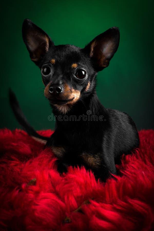 美丽的玩具狗 免版税库存图片