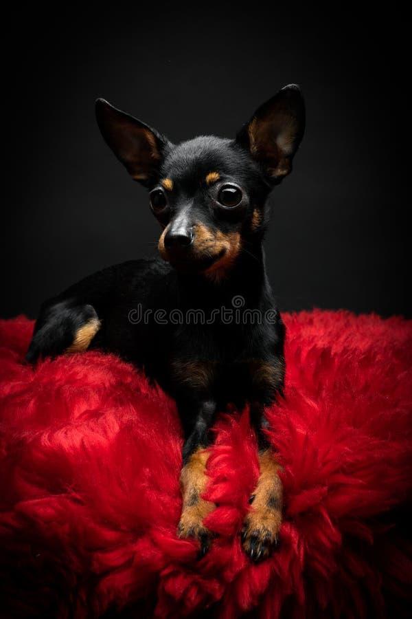 美丽的玩具狗 库存照片