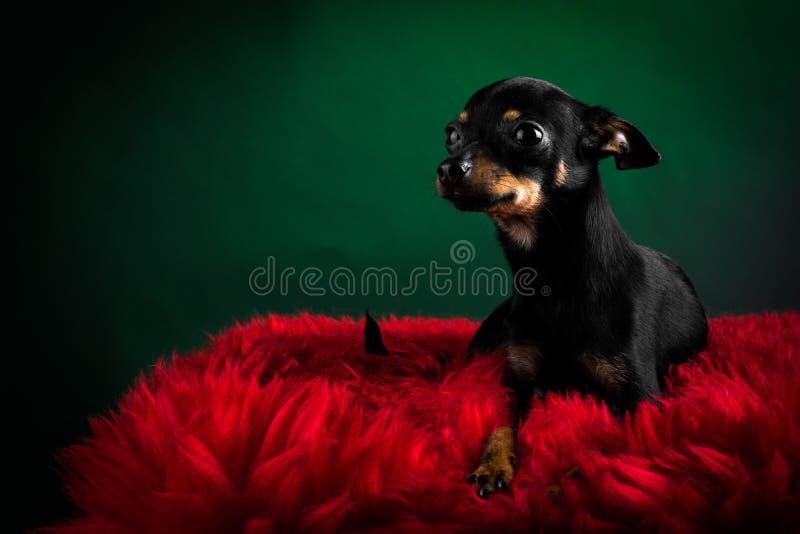 美丽的玩具狗 免版税库存照片