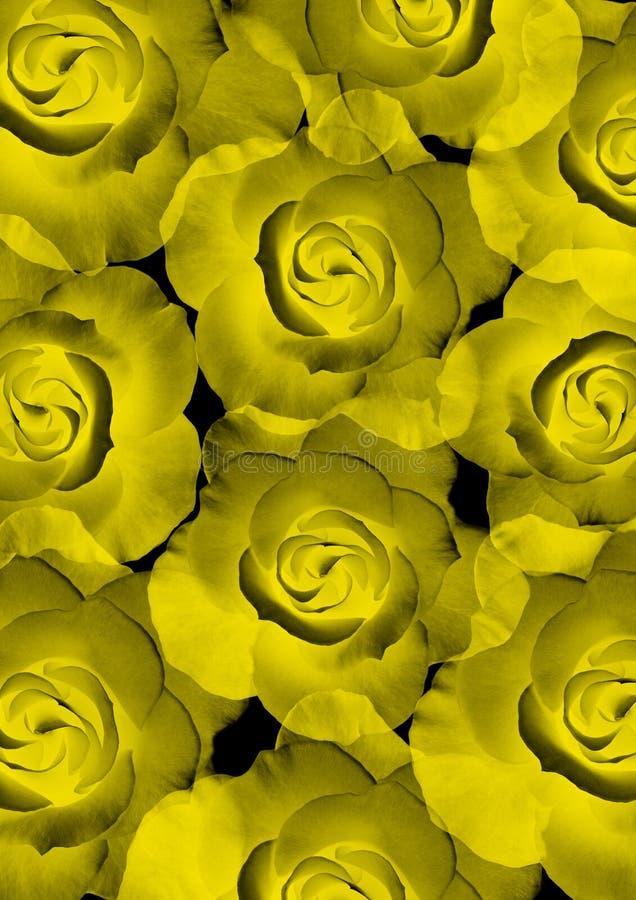 美丽的玫瑰光亮的黄色 皇族释放例证