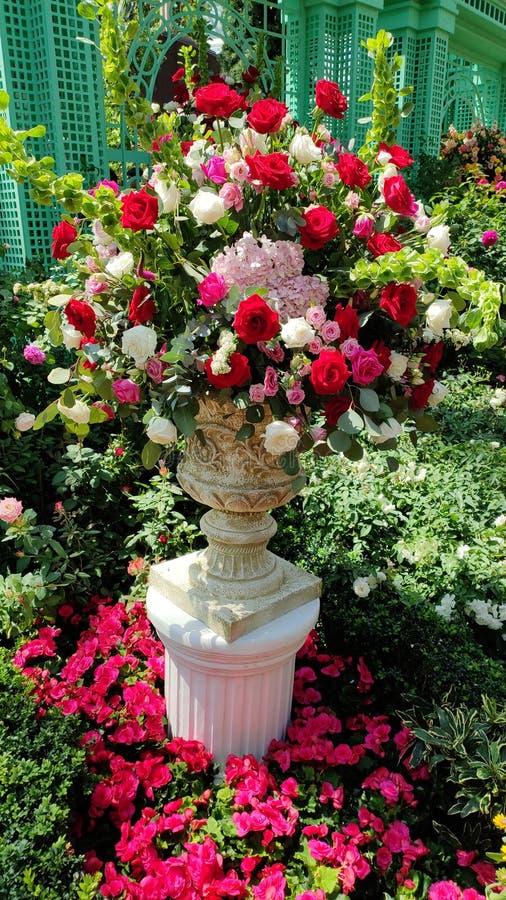 美丽的玫瑰色花瓶有绿色植物背景 库存图片