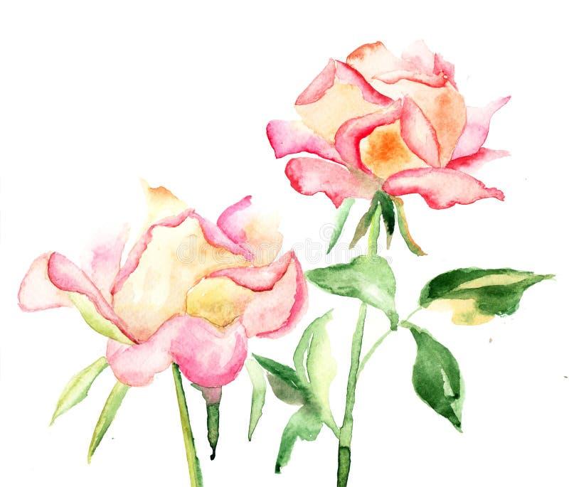 美丽的玫瑰花 免版税库存照片