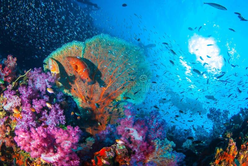 美丽的珊瑚庭院礁石 免版税库存照片