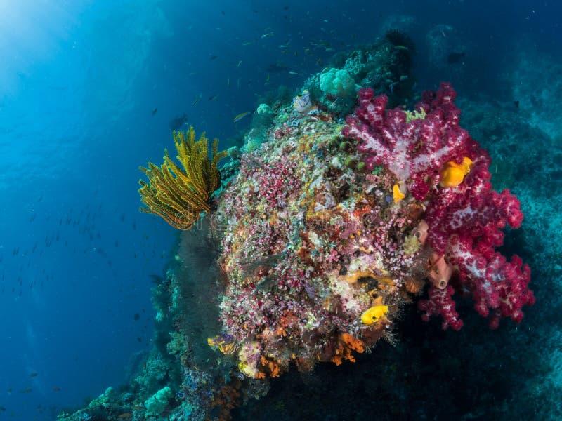 美丽的珊瑚礁,王侯Ampat,印度尼西亚 免版税库存照片