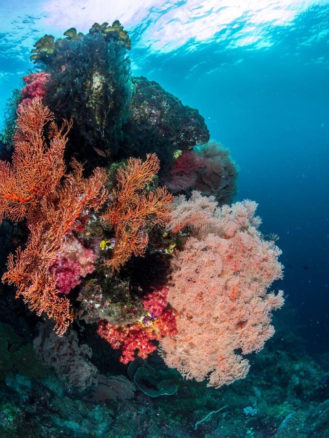 美丽的珊瑚礁,王侯Ampat,印度尼西亚 免版税库存图片
