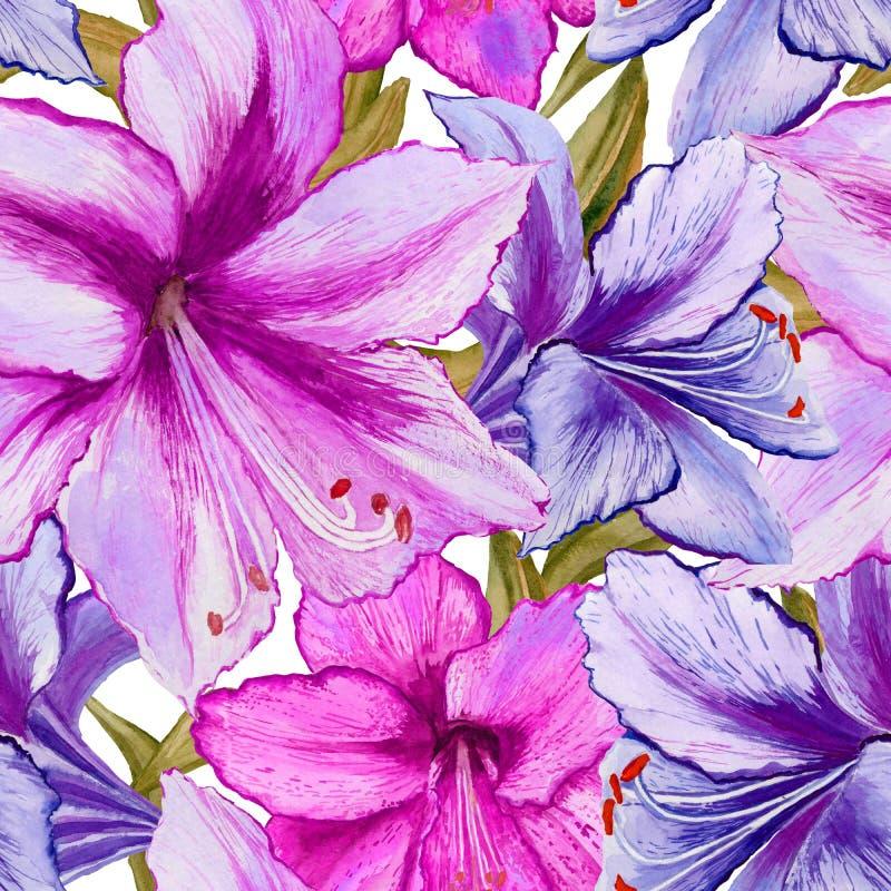 美丽的生动的紫色和桃红色孤挺花在白色背景开花 无缝的春天模式 多孔黏土更正高绘画photoshop非常质量扫描水彩 向量例证