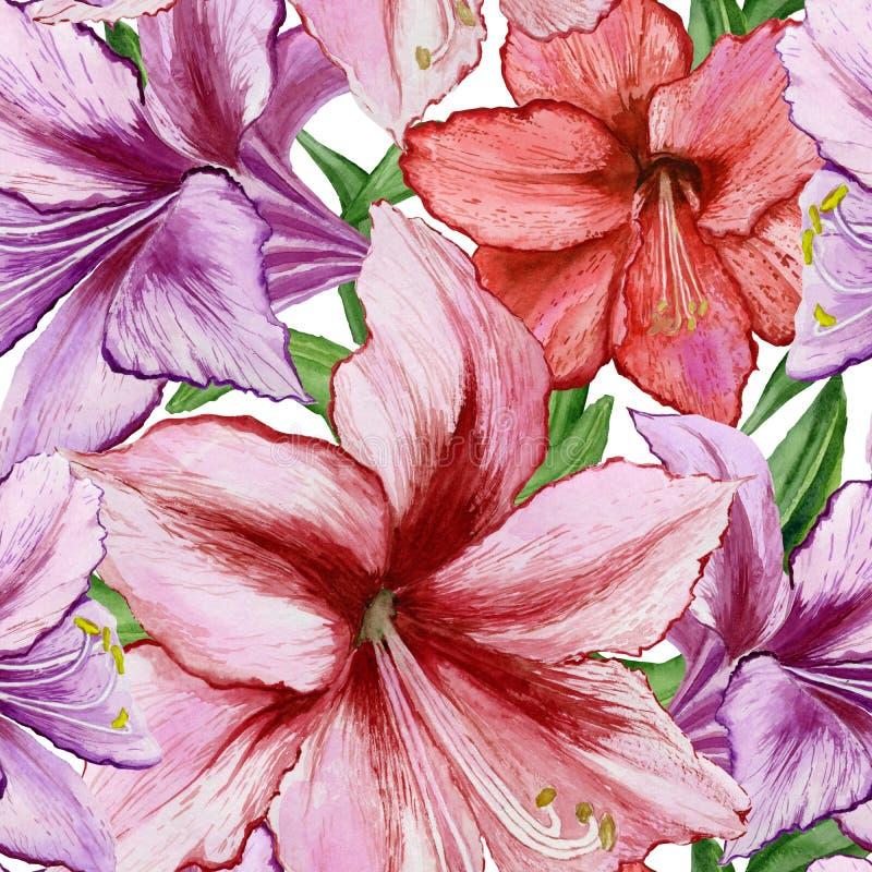 美丽的生动的紫色和红色孤挺花在白色背景开花 无缝的春天模式 多孔黏土更正高绘画photoshop非常质量扫描水彩 库存例证