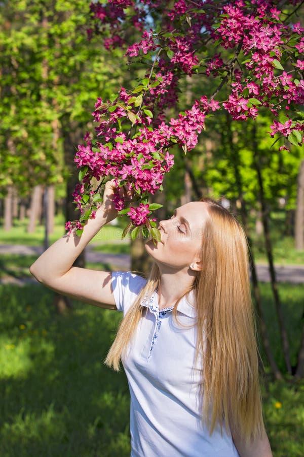 美丽的白肤金发的妇女嗅到的苹果树花 女孩和开花的苹果树 与树花的春天 免版税图库摄影