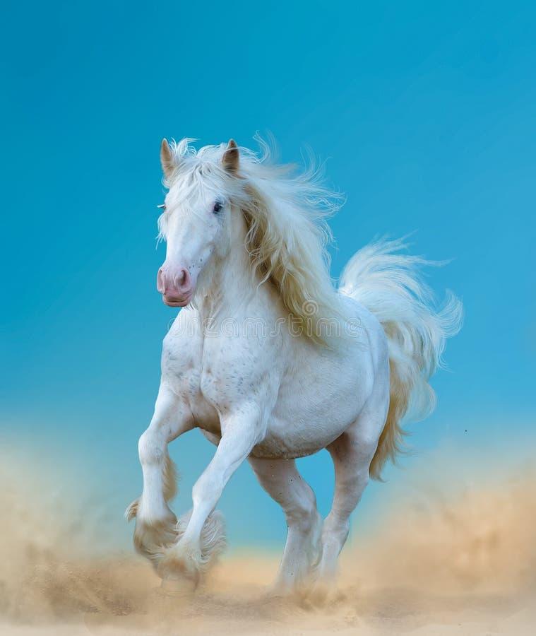 美丽的白色吉普赛马 免版税库存照片